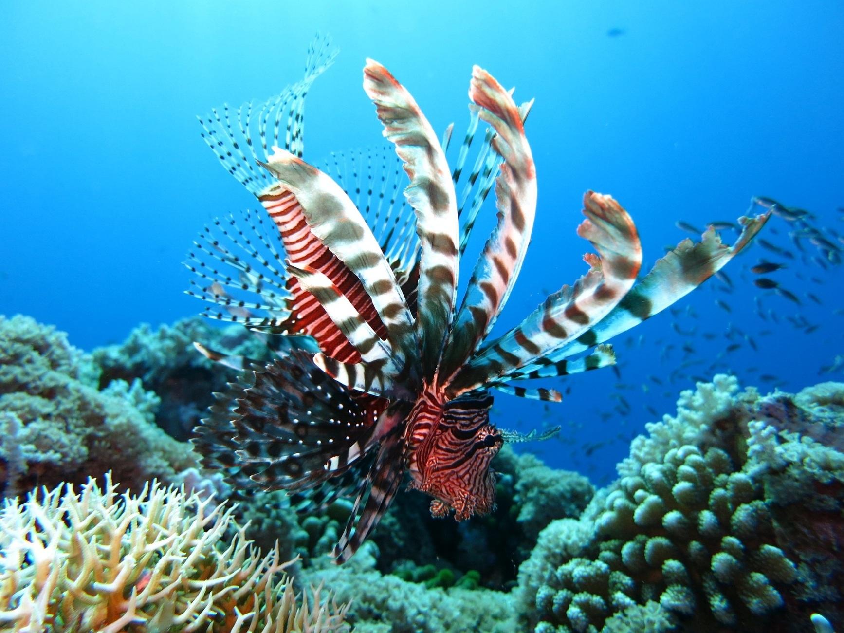 Дотримуючись мети захисту навколишнього середовища, група Anantara ініціювала програму по спонсорству коралів на Мальдівах. Гостям Anantara пропонують взяти участь в програмі та робити позитивний внесок в охорону рифів.
