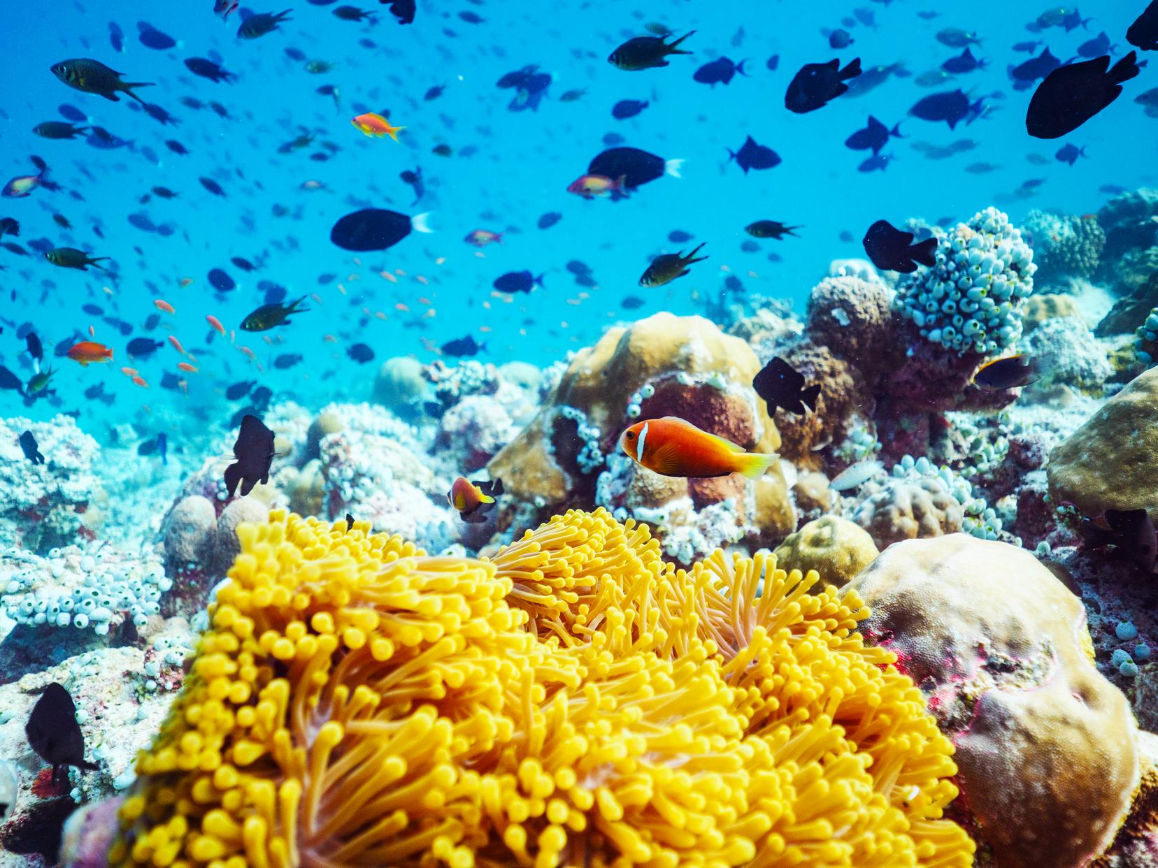 Острів оточує блакитна лагуна, у водах якої безліч різнобарвних морських жителів. Плавайте з маскою, занурюйтесь у глибини коралових рифів або просто засмагайте на м'якому піску - тут будь-який відпочинок - райський.