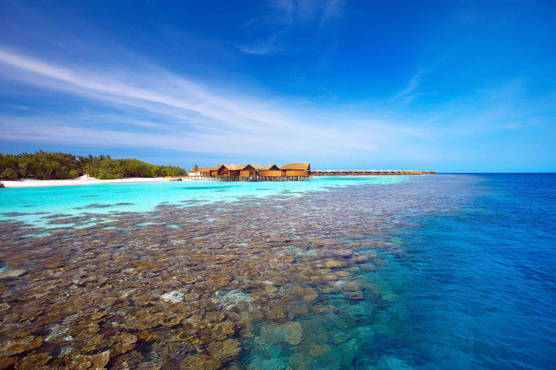 Живий домашній риф навколо острова