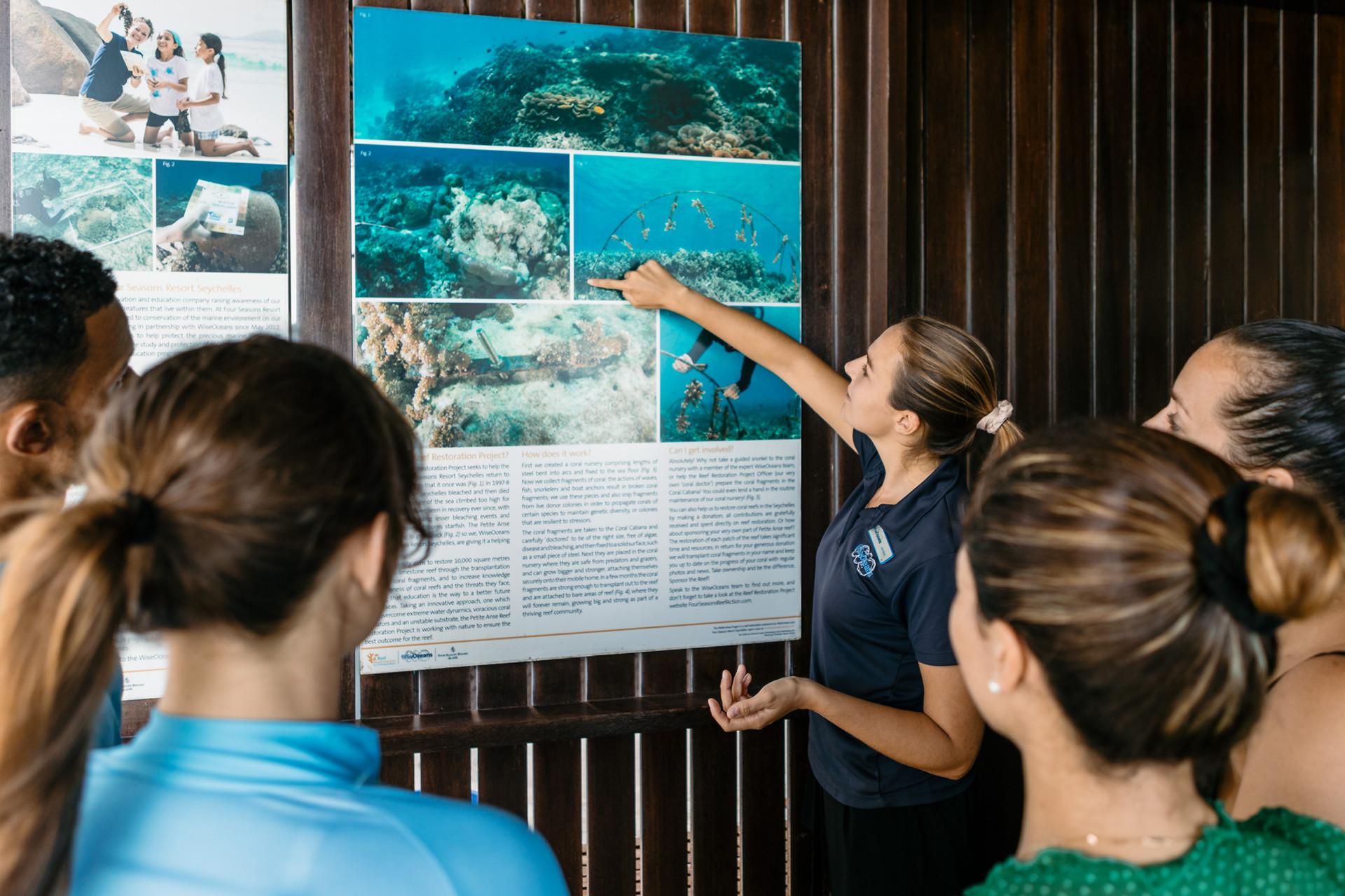 Ознакомьтесь с морской жизнью Сейшельских островов в центре Coral Cabana. Вам расскажут про программы по сохранению уникальной природы островов, проведут уроки снорклинга и тематические экскурсии.