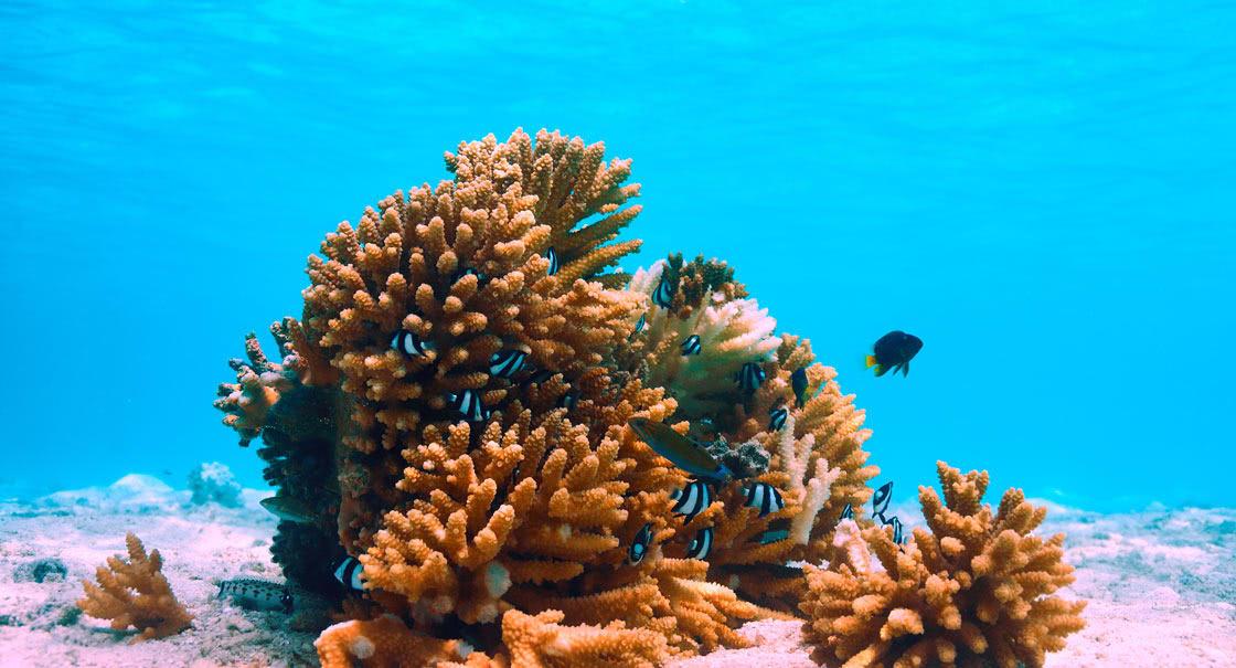 На курорті діє програма по збереженню коралів Coral Adoption, в якій і ви   можете взяти участь. Ближче до краю лагуни знаходиться відроджений риф, де живуть понад 450 видів коралів.