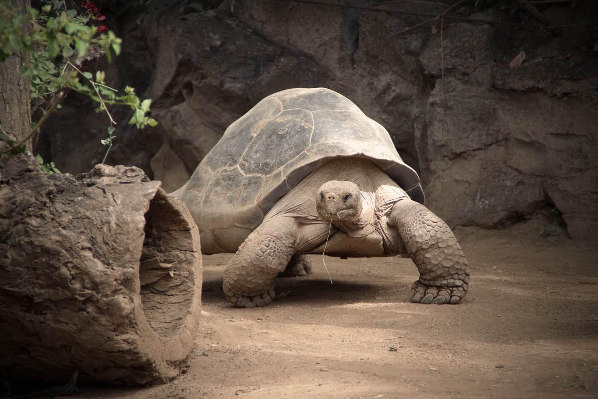 На пароме можно добраться до острова Кюрьёз, где проживает 500 гигантских сухопутных черепах, а также к острову Ла-Диг, известного своими уединенными пляжами.