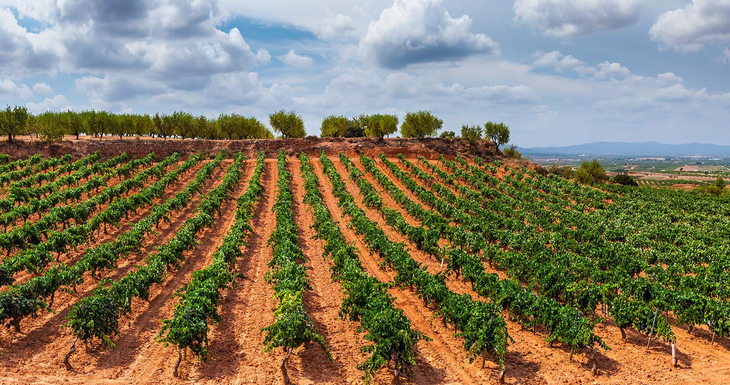 Ла Ріоха - найвідоміший виноробний регіон Іспанії. А гордість іспанського виноробства - червоний сорт Темпранільо – спробувавши його на дегустації, ви вже не сплутаєте це вино ні з яким іншим.