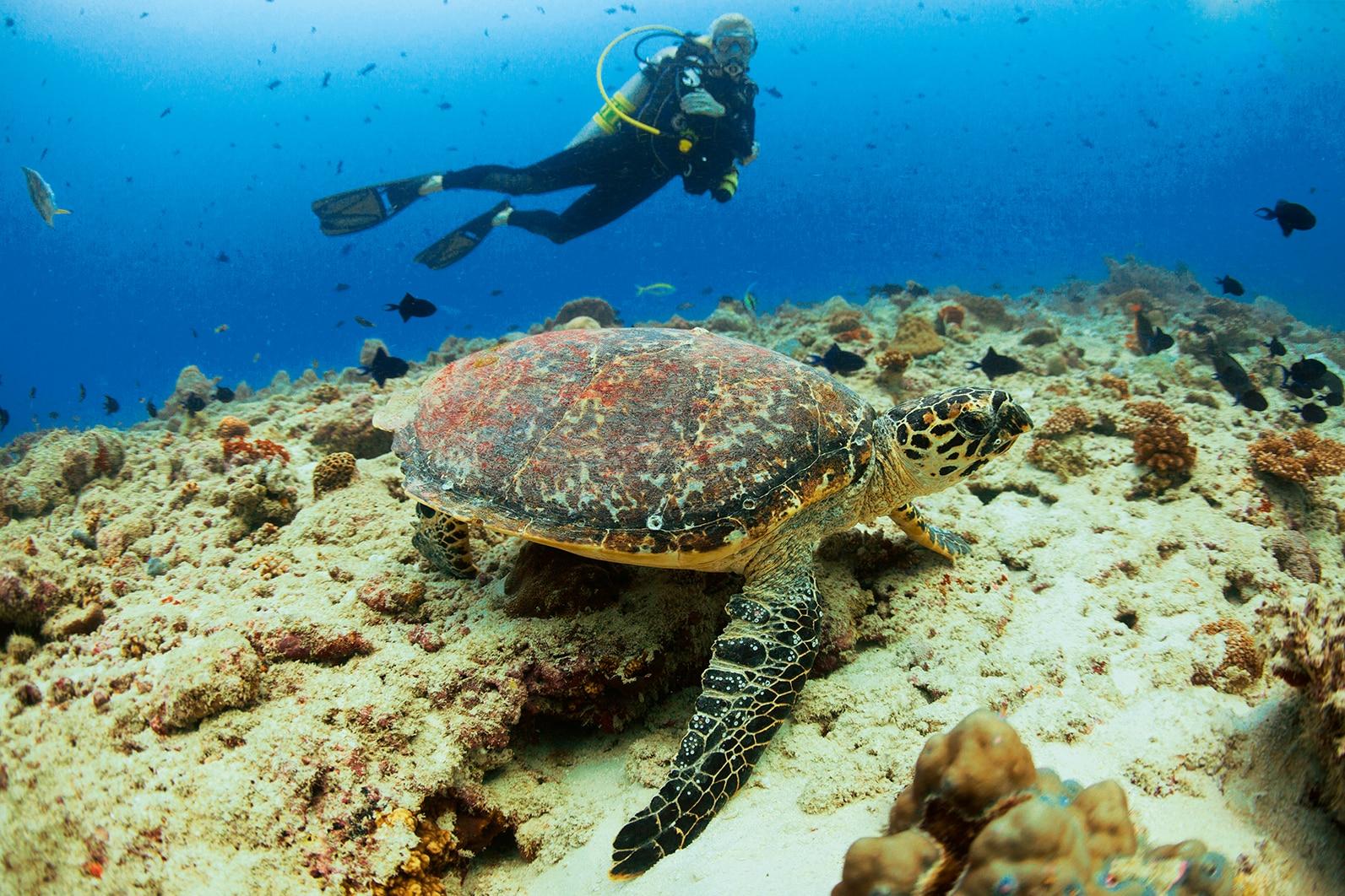 Це одне з кращих місць для дайвінгу на Мальдівах.